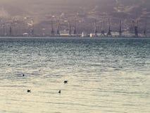 Море, чайки и взгляд порта Стоковое Изображение RF