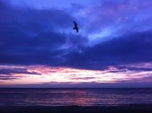 Море, чайки и восход солнца Стоковые Фотографии RF