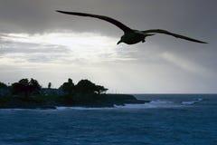 море чайки пляжа Стоковая Фотография
