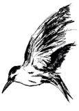 море чайки Бесплатная Иллюстрация