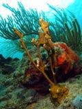 море штанги пожара коралла Стоковая Фотография