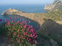 море 9 ландшафтов Стоковое Изображение RF