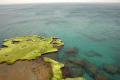 море algea стоковые изображения rf