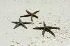 море asterik Стоковое Изображение RF