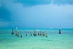 море riviera maya чаек Стоковое фото RF