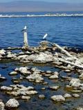 море salton Стоковое Изображение
