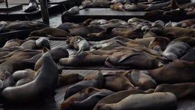 море san пристани 39 львов francisco видеоматериал