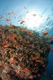 море sinai рифа Египета красное южный Стоковые Фото