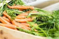 моркови молодые стоковая фотография