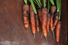 моркови органические Стоковые Фото