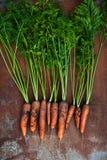моркови органические Стоковая Фотография RF
