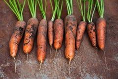 моркови органические Стоковые Изображения RF