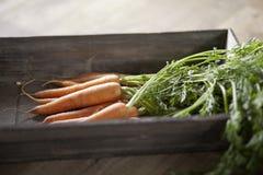 моркови свежие Стоковая Фотография