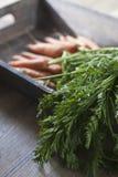 моркови свежие Стоковые Изображения RF