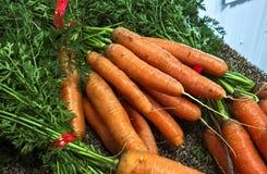 моркови свежие Стоковые Фотографии RF