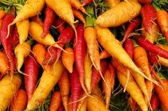 моркови цветастые Стоковые Фотографии RF