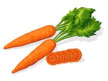 морковь зрелая Стоковое Изображение