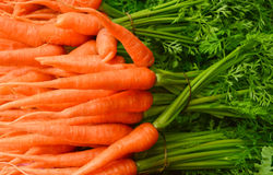 Морковь младенца Стоковая Фотография RF