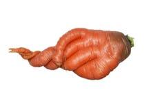 Морковь на белой предпосылке Стоковое Изображение RF
