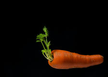 Морковь на черной предпосылке Стоковая Фотография RF