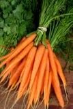 морковь свежая Стоковые Изображения RF