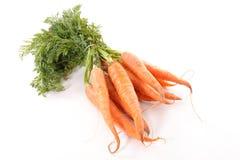 морковь свежая Стоковая Фотография