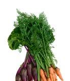 морковь свекл Стоковое Изображение RF
