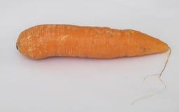 морковь Стоковое Фото