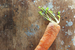 морковь Стоковая Фотография RF