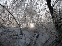 Морозить вверх по ветвям Стоковые Изображения RF