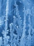 морозная естественная картина Стоковое фото RF