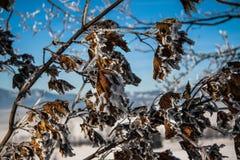 морозная зима ландшафта Ветви покрытые с снегом и льдом в холодной зиме выдерживают Стоковая Фотография