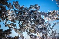 морозная зима ландшафта Ветви покрытые с снегом и льдом в холодном weatherr зимы Стоковые Фото
