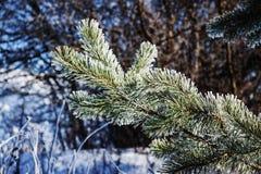 морозная зима ландшафта Ветви покрытые с снегом и льдом в холодном weatherr зимы Стоковое фото RF