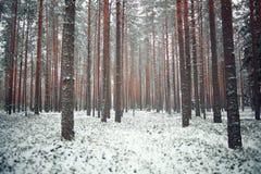 морозная зима ландшафта Стоковое Изображение