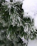 морозная зима снежностей природы утра Стоковые Фото