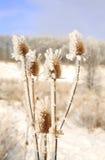морозная зима снежностей природы утра Стоковая Фотография RF
