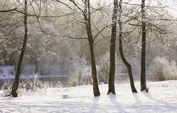 морозная зима снежностей природы утра Стоковая Фотография