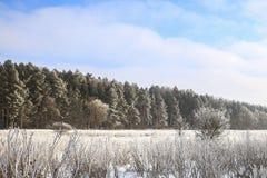 морозная зима снежностей природы утра Стоковые Изображения