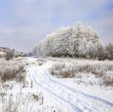 морозная зима снежностей природы утра Стоковое фото RF