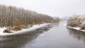 морозная зима снежностей природы утра Стоковое Изображение RF
