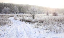 морозная зима снежностей природы утра Стоковые Изображения RF