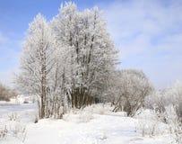 морозная зима снежностей природы утра Стоковые Фотографии RF