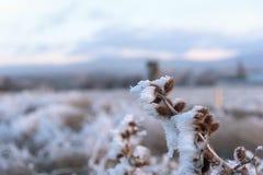 Морозная зима травы терния Стоковое Изображение RF