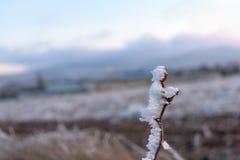 Морозная зима травы Стоковые Изображения RF