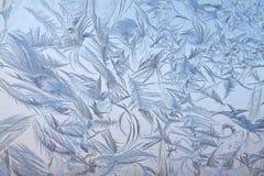 Морозная картина стоковые фотографии rf