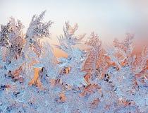 морозная картина Стоковое Фото