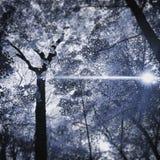 Морозная солнечность лист Стоковые Фото