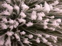 морозная текстура сосенки стоковые изображения