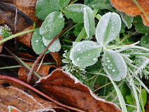 морозная трава Стоковое Изображение RF